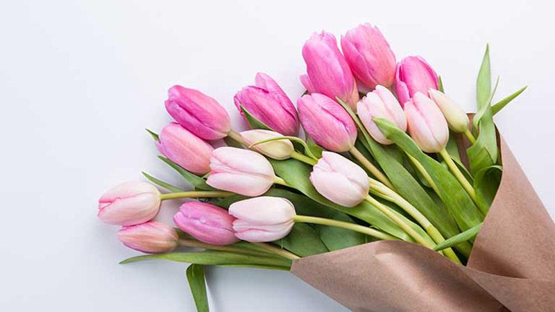 دسته گل لاله یک مثال کاربردی برای توضیح تگ alt